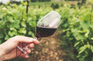 domowe wino - z czego zrobić wino na wiosnę